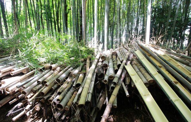 先オプ民はかぐや姫を求めて今日も竹藪へ入る